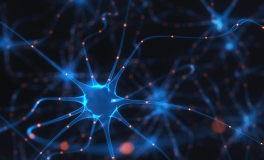 Neural Networks Answer Questions